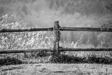 ID: Grayscale image of wooden fence post in against a field grown wild.