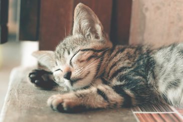 ID: Adorable grey and black tabby kitten sleeping on a carpeted stair.