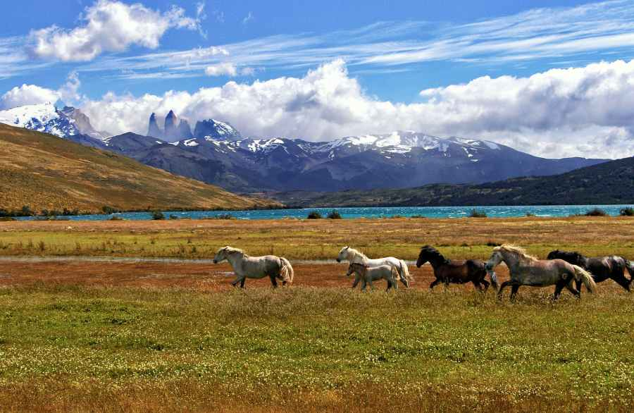 ID: A herd of horses in a green grass field with mountains and a lake in the background